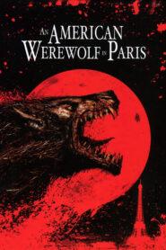 Amerykański Wilkołak w Paryżu zalukaj