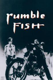 Rumble Fish zalukaj