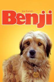 Benji zalukaj