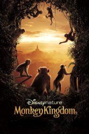 Monkey Kingdom zalukaj