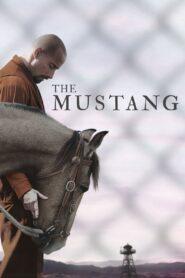 Mustang zalukaj