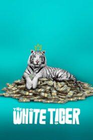 Biały tygrys zalukaj